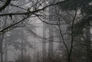 Silver Falls-sudden mist-72+
