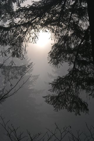 Silver Falls-mist-sun attempt-72
